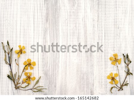 Lovely Rock Rose Dried Yellow Flowers on Shabby Chic Rustic White Wood Board with room or space for copy, text, or words in the center area. - stock photo