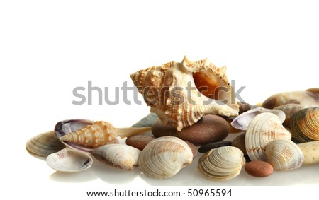 lovely seashells against white background