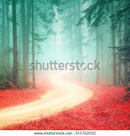 Lovely seasonal color foggy forest road. Magic color woodland with bright foggy road. - stock photo
