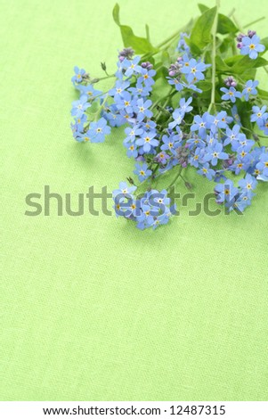 lovely spring flowers - forget-me-not on green - stock photo