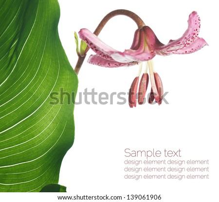 Lovely summer flora against white background. Useful design element. - stock photo