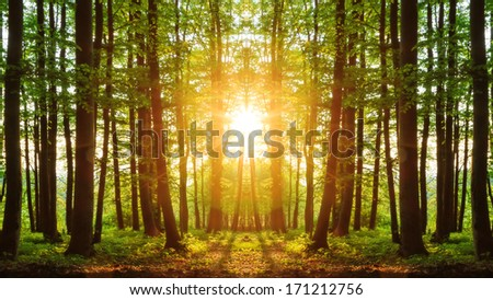 Lovely Sunset behind the Forrest in Upper Franconia / Mirror Image - stock photo