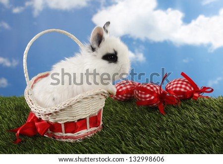 Lovely white Easter bunny in basket and eggs - stock photo