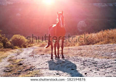 lovely young horse in the mountains of Crimea at sunset - stock photo
