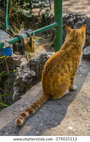 lover red cat walking in the park in autumn, he is sitting waiting for her love near the wedding of locks in the park - stock photo