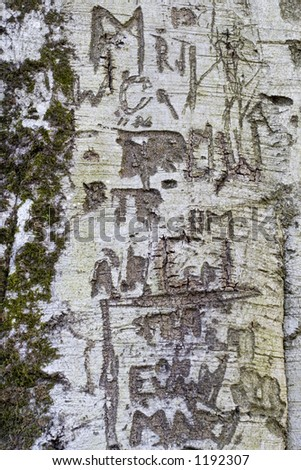 Lover's engraving in the bark of a Silver Birch tree. - stock photo