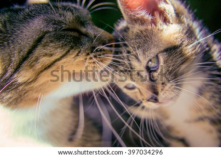 Loving cat mother and kitten - stock photo