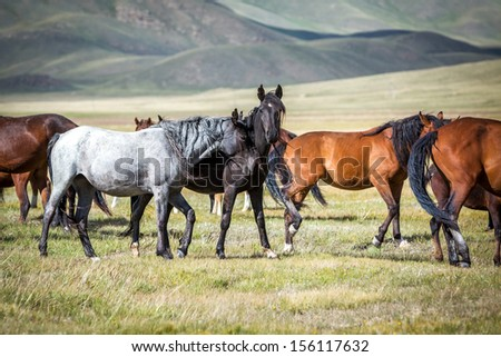 Loving horses at the pasture - stock photo
