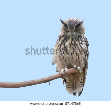 low angle shot of a eagle owl sitting on a bough in front of light blue back - stock photo