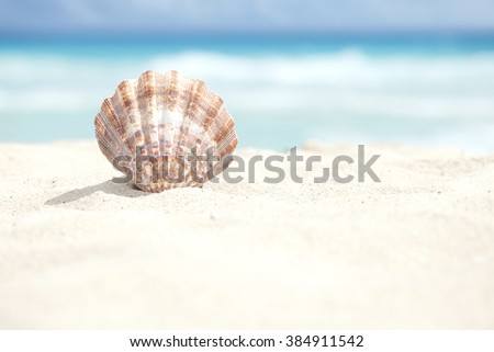 Low angle view of a scallop shell in the sand beach of the Caribbean sea - stock photo