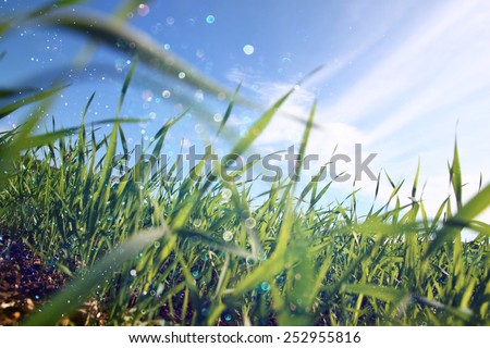 low angle view of fresh grass against blue sky with clouds. freedom and renewal concept with glitter bokeh lights - stock photo