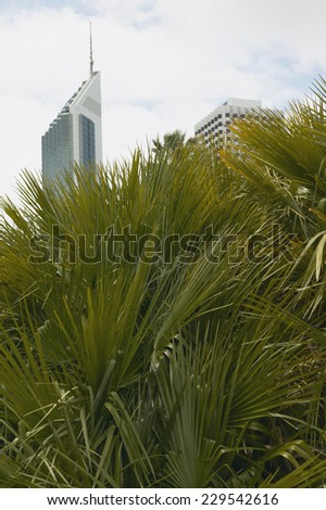 Low angle view of high-rise buildings obscured by palm trees - stock photo
