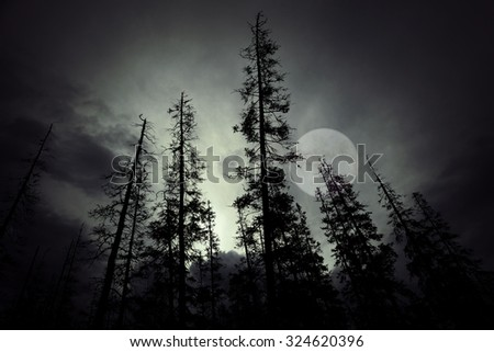 Low angle view of spooky forest with dark sky and big full moon - stock photo