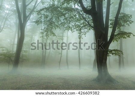 Low fog in the forest