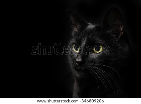 Low key shot of a black cat on black