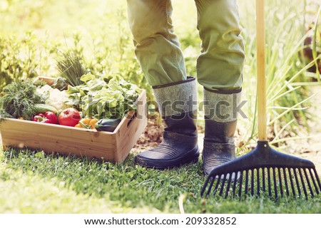 Low section of male farmer with vegetable box  - stock photo