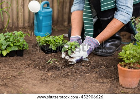 Low section of male gardener planting saplings at greenhouse