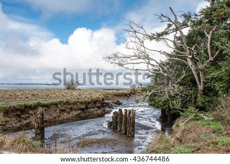 Low tide along Grays Harbor Bay in Olympic Peninsula of Wa. State.  Old pilings along lush bay shoreline. - stock photo