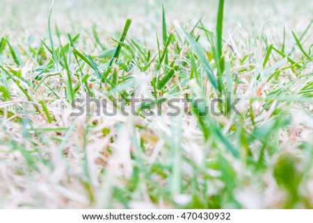 Low view of dry grass and live grass