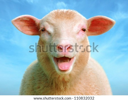 lucie the sheep, look at my new design of lucie - stock photo
