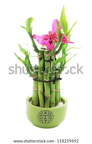 lucky bamboo in bowl with green and pink butterfly cut off and isolated - stock photo