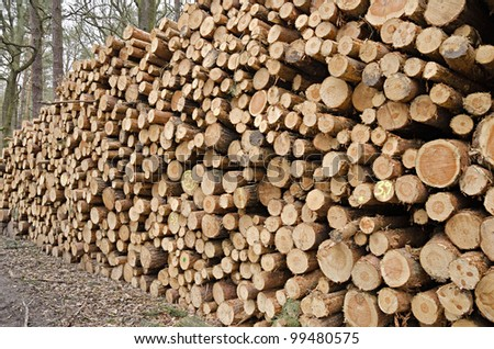 Lumber pile in a forest in Germany