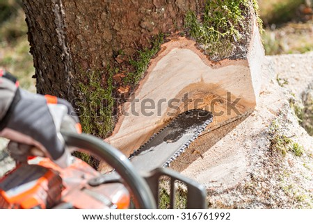 Lumberjack cutting tree in forest - stock photo