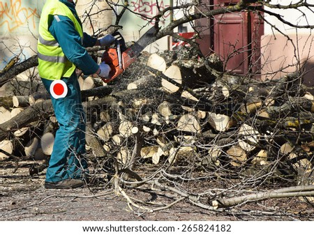 Lumberjack is sawing trees - stock photo