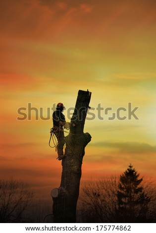 Lumberjack with chainsaw cutting down an oak tree against sunset sky. - stock photo