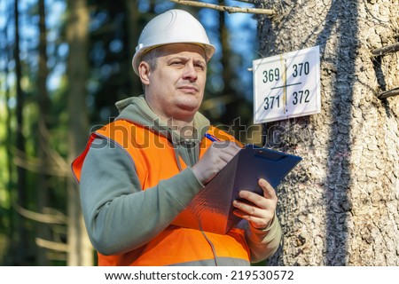 Lumberjack with folder near marked tree in forest  - stock photo