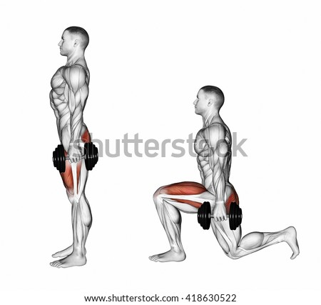quadriceps stock photos royaltyfree images  vectors