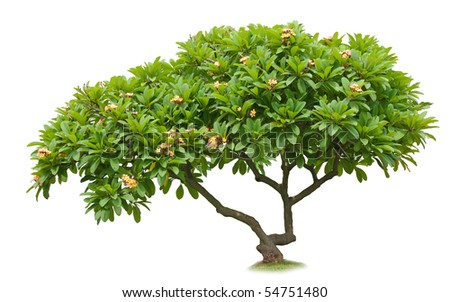 Luntom tree with flowers - stock photo