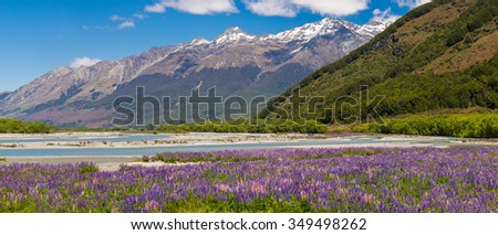 Lupin field along Rees River in Glenorchy, New Zealand - stock photo