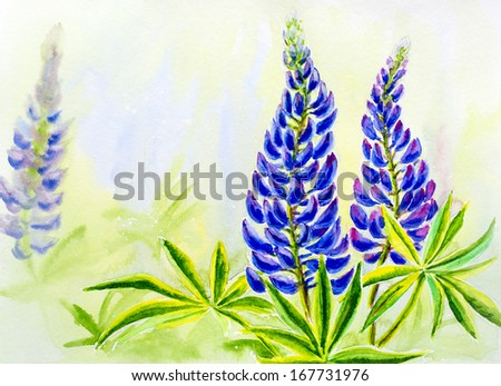 Lupine flowers, watercolor - stock photo