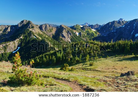 lupine in an alpine medow in Washington State - stock photo