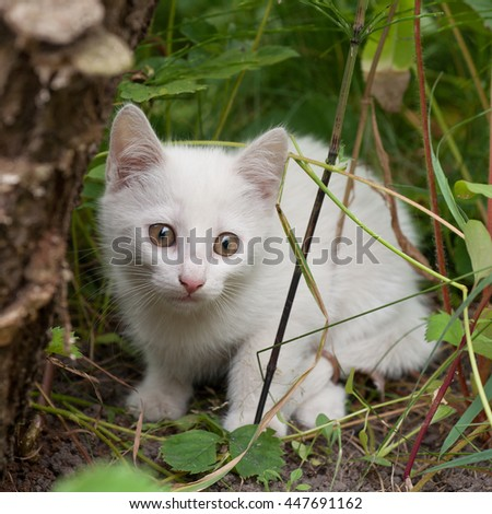 Lurking white kitten