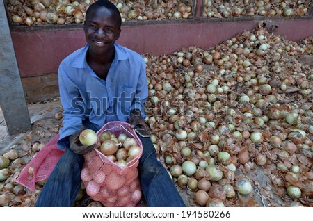 LUSAKA, ZAMBIA - DECEMBER 2: farmer select onion for distribution in Zambia and Malawi,on December 2,2011 in Lusaka, Zambia  - stock photo