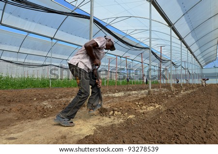 LUSAKA, ZAMBIA - DECEMBER 2: farmer works the soil in the greenhouses, which provide employment to 800 farmers, on December 2,2011 in Lusaka, Zambia - stock photo