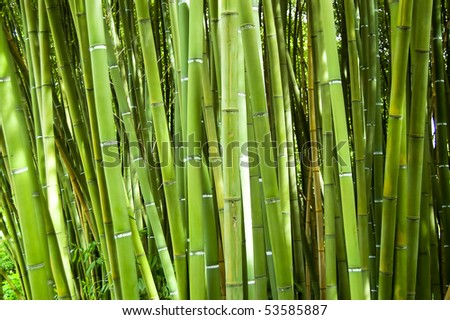 Lush and dense green bamboo grove in a park - stock photo
