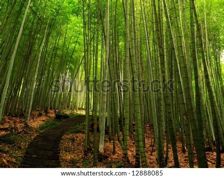 Lush Bamboo Forest -- with a hiking path, located in Taiwan - stock photo