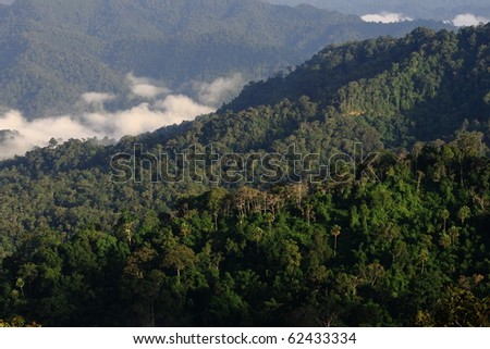 lush ever green tropical forest cover in morning fog in Thailand - stock photo