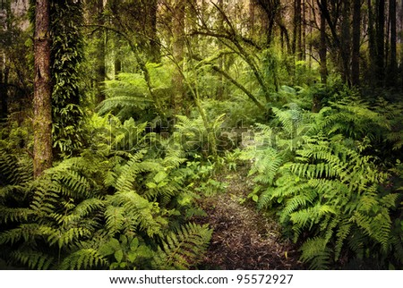 Lush ferny rainforest, with path winding through it.  Grungy textures applied to give a mysterious air. - stock photo