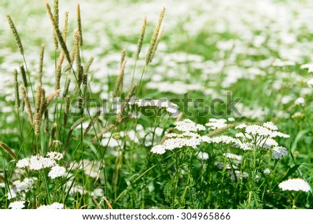 Lush grass flowers natural background - stock photo