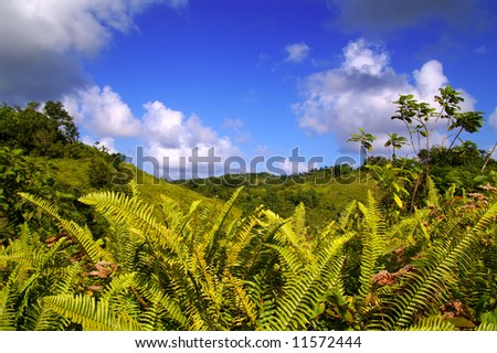 lush green ferns against a blue sky - stock photo