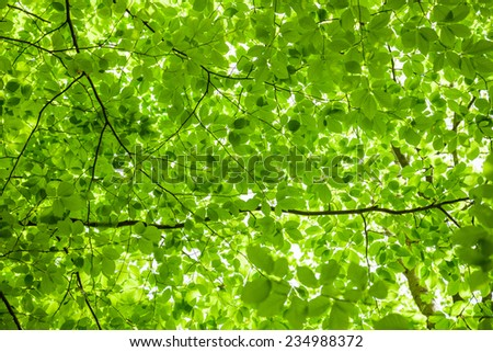 Lush green foliage in the forest in spring  - stock photo