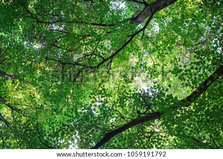 Lush green foliage of trees and clear sky in a forest. Warm spring sun shining & Lush Green Foliage Trees Clear Sky Stock Photo (Download Now ...