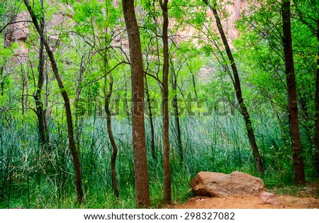 Lush Green Forest at Zion National Park - stock photo