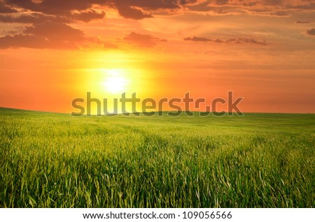 lush green grass on the field. natural composition