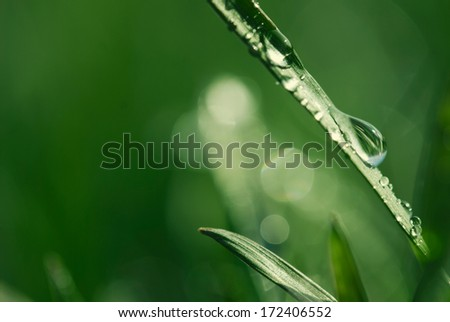Lush green grass with dew.  - stock photo