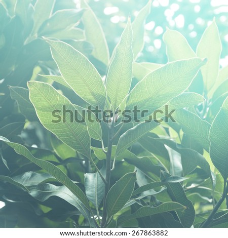 Lush green leaves against sunlight. A beautiful abstract nature background. - stock photo